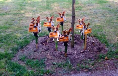 Hundetreffen im Grünen